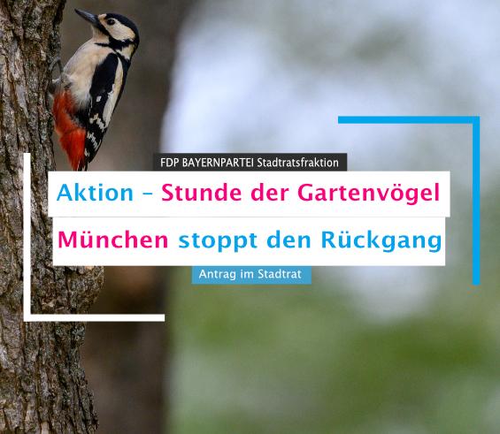 Aktion - Stunde der Gartenvögel München stoppt den Rückgang der Singvögel